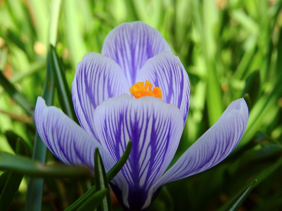 aafro flor primavera flores da primavera natureza