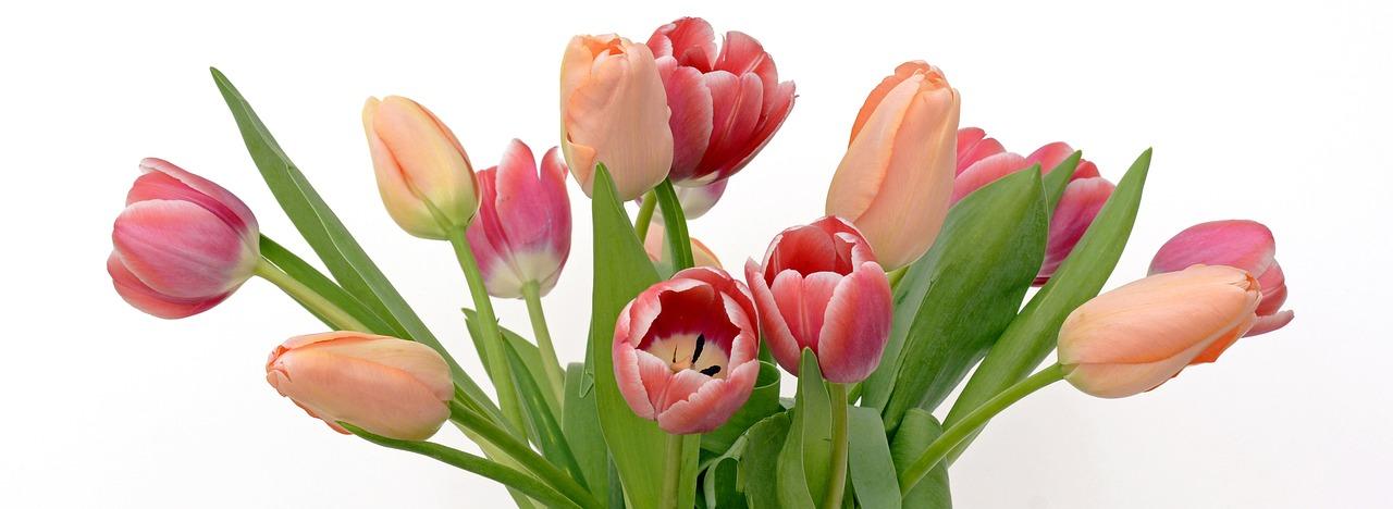 https://cdn.pixabay.com/photo/2017/03/18/01/02/tulips-2152974_1280.jpg