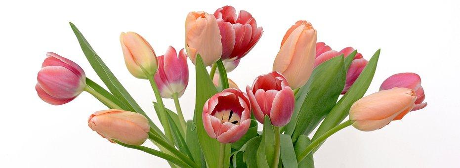 Tulpaner, Blommor, Aprikos, Rosa, Natur