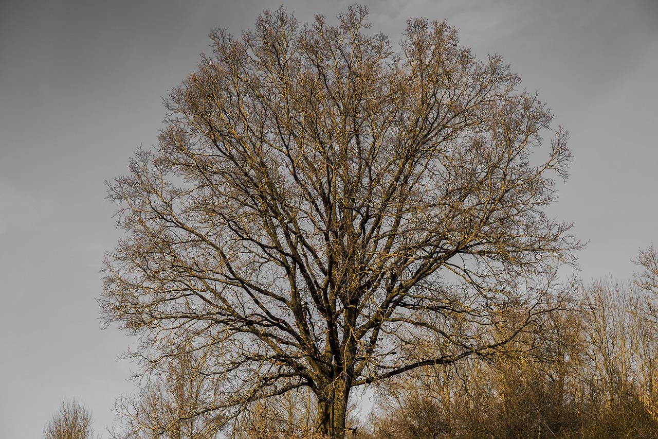серединку дерево без листвы фото месте