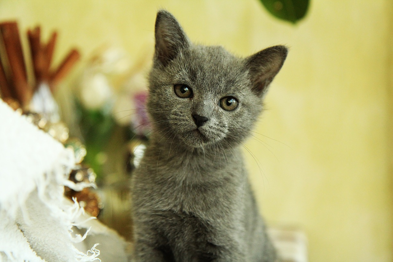 Фото котенка для детей
