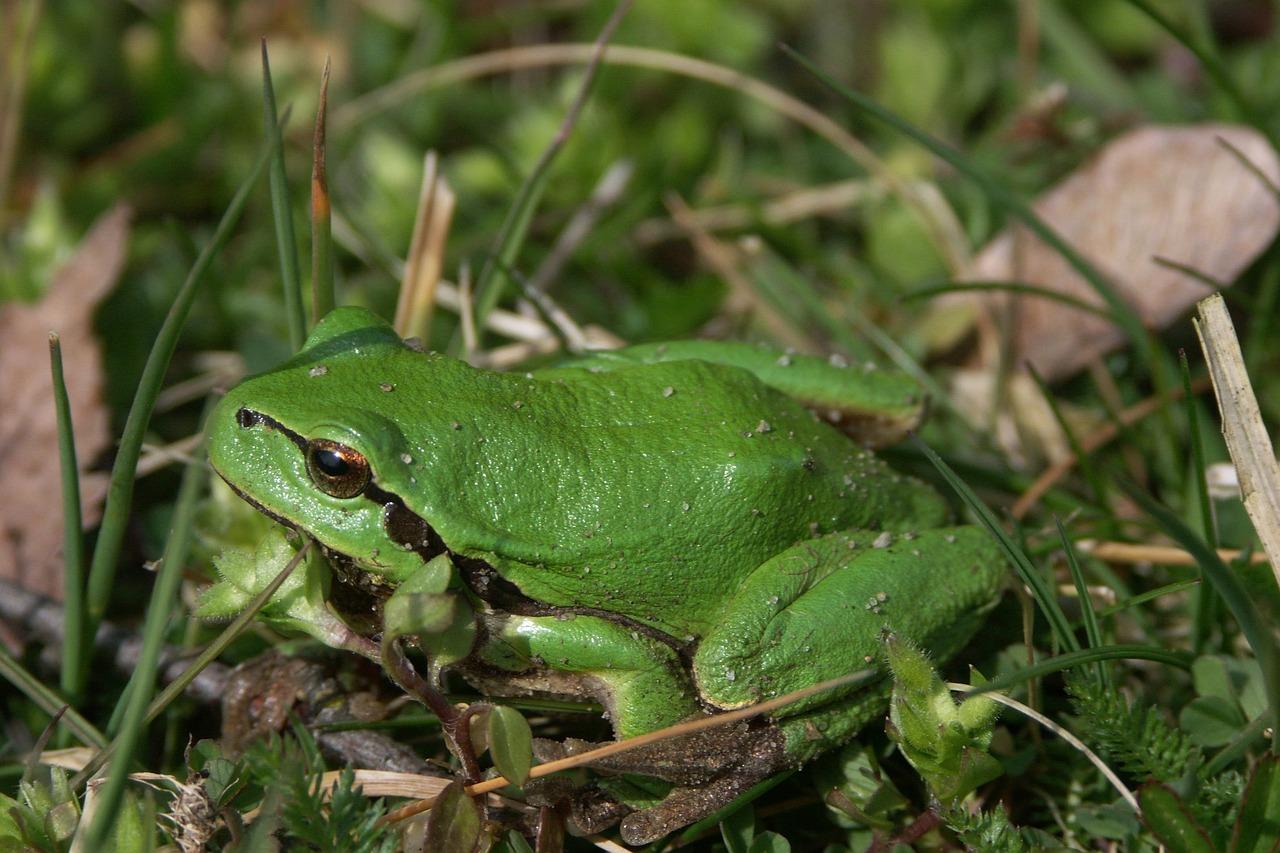 Все картинки лягушка зеленая