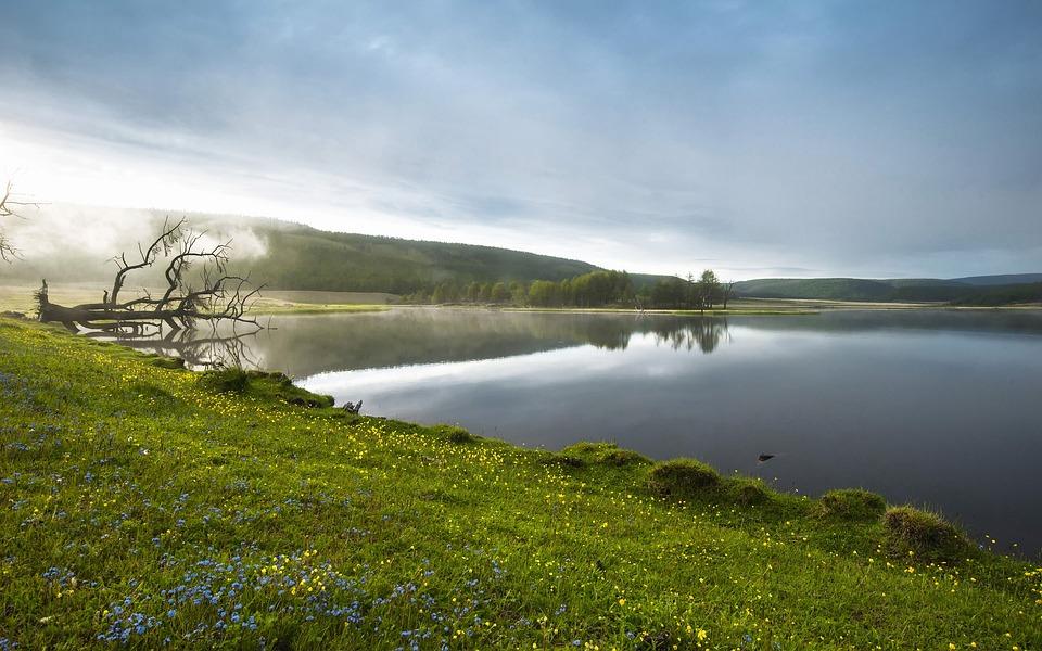 lakeside morning haze flowers free photo on pixabay