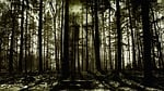 horror, face, forest