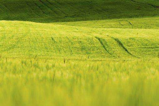 Grass, Nature, Green, Field, Sunny