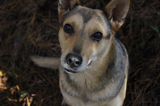 Anjing Closeup Lucu Manis Sekali