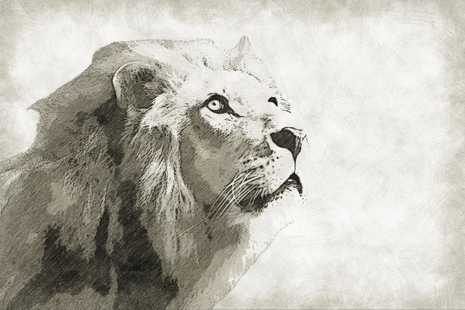 Singa, Mamalia, Satwa, Liar, Margasatwa, Raja, Potret