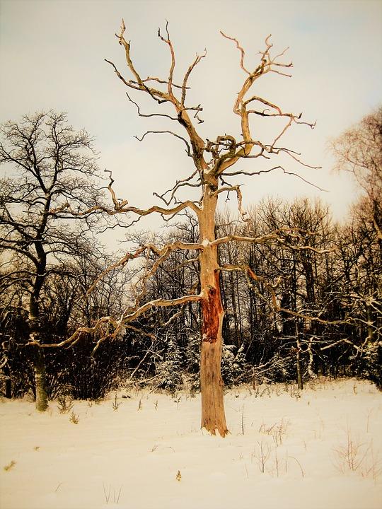 nackt im schnee bilder