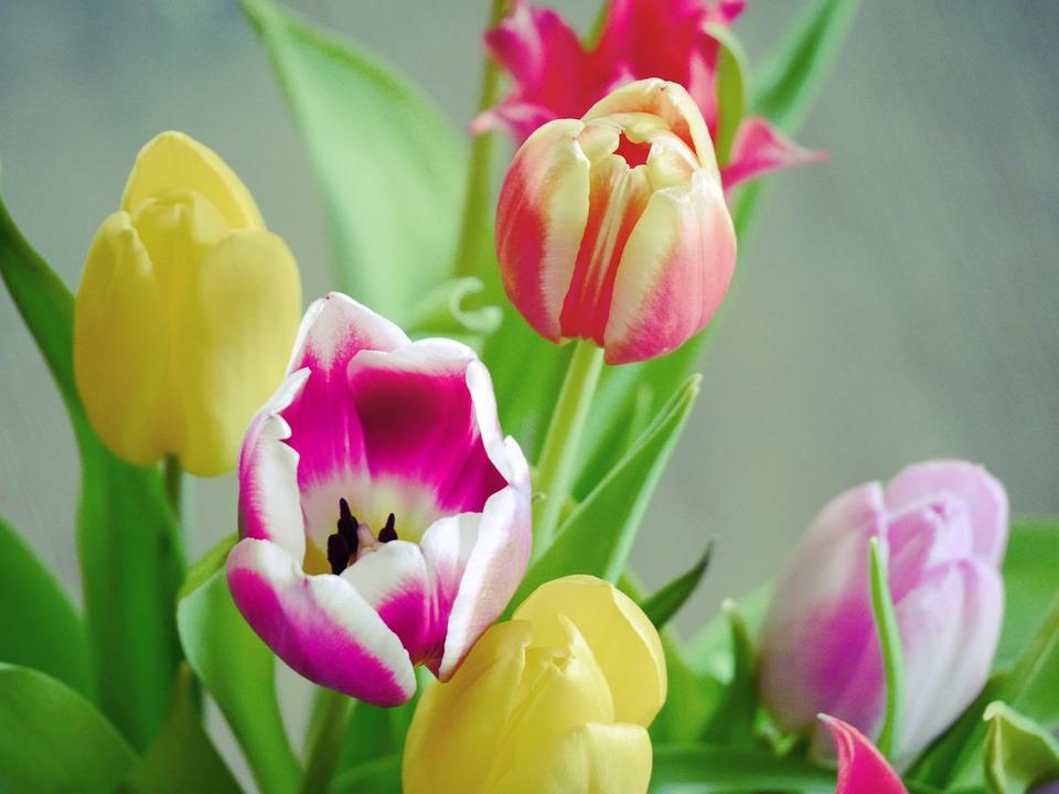 Bouquets de tulipes bouquet de tulipes bouquet tulipes for Livraison tulipes