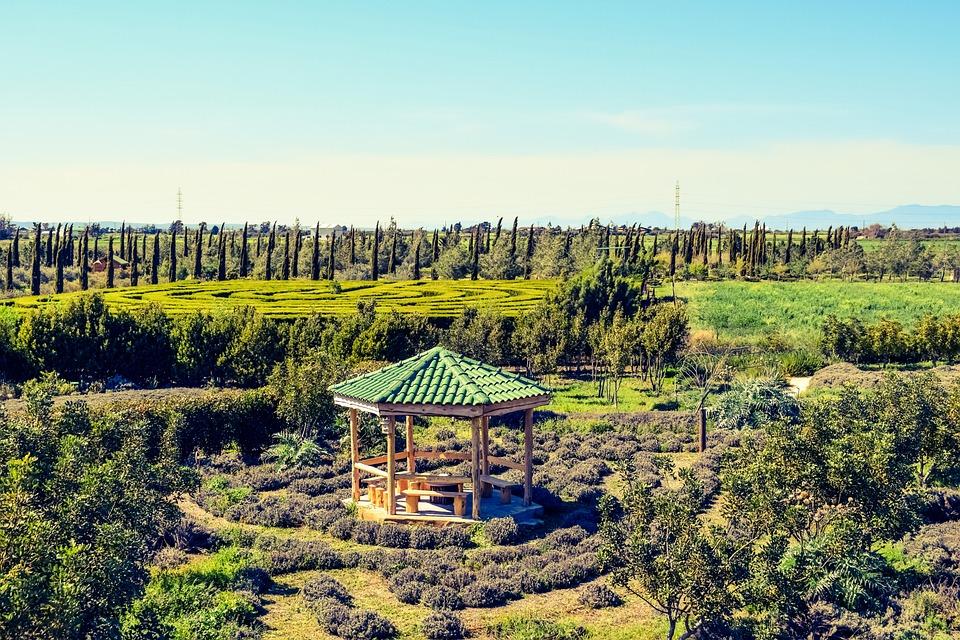 Cyprus Avgorou Cyherbia Botanical · Free photo on Pixabay