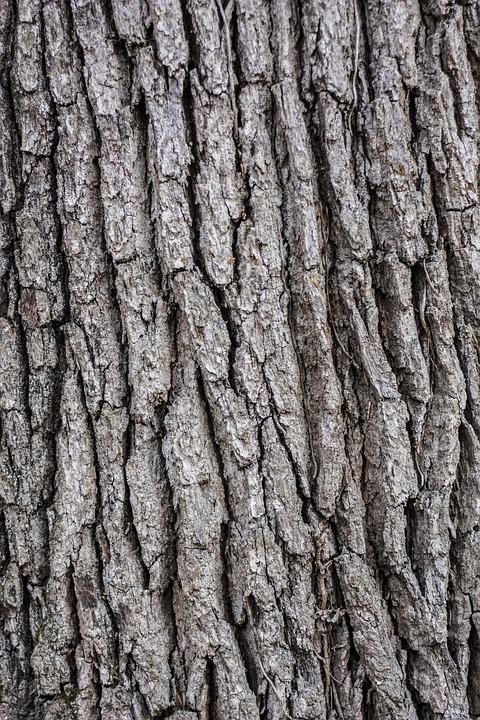 tree and bark Tree bark for sale, wholesale various high quality tree bark for sale products from global tree bark for sale suppliers and tree bark for sale.