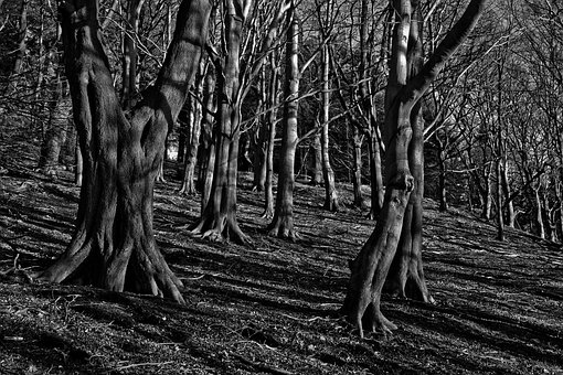 Trees, Woods, Mystery, Forest, Dark