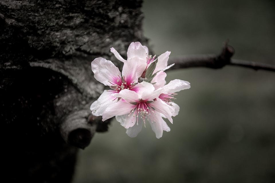 gratis fotografie blomster blomst v ren natur gratis bilde p pixabay 2164865. Black Bedroom Furniture Sets. Home Design Ideas