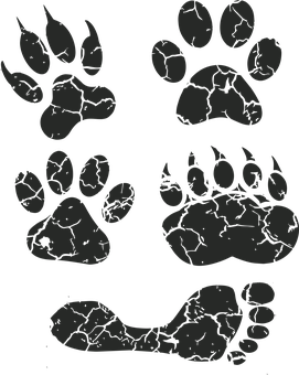 Paw Print Images Pixabay Download Free Pictures