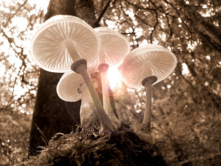 Forest Mushrooms Nature Autumn Light Tree