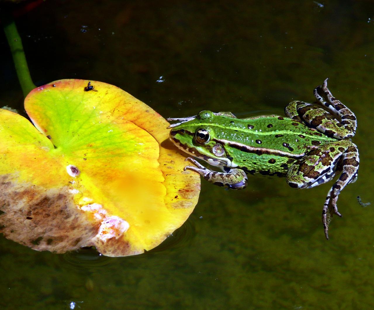 приснилось что ловлю лягушек