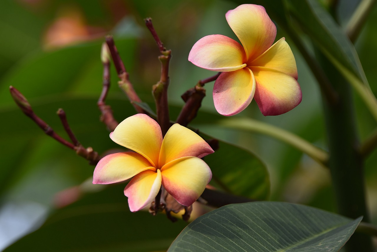 Картинка экзотического цветка
