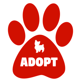 Adopt, Dogs, Cats, Pet, Animal Adoption