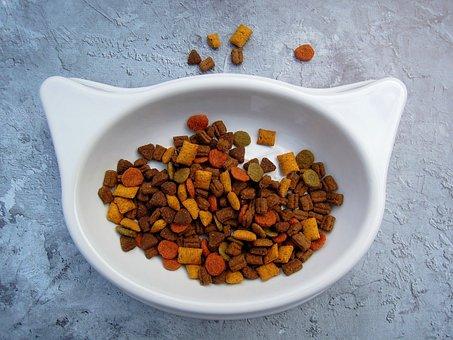 best cat food for gassy kitten