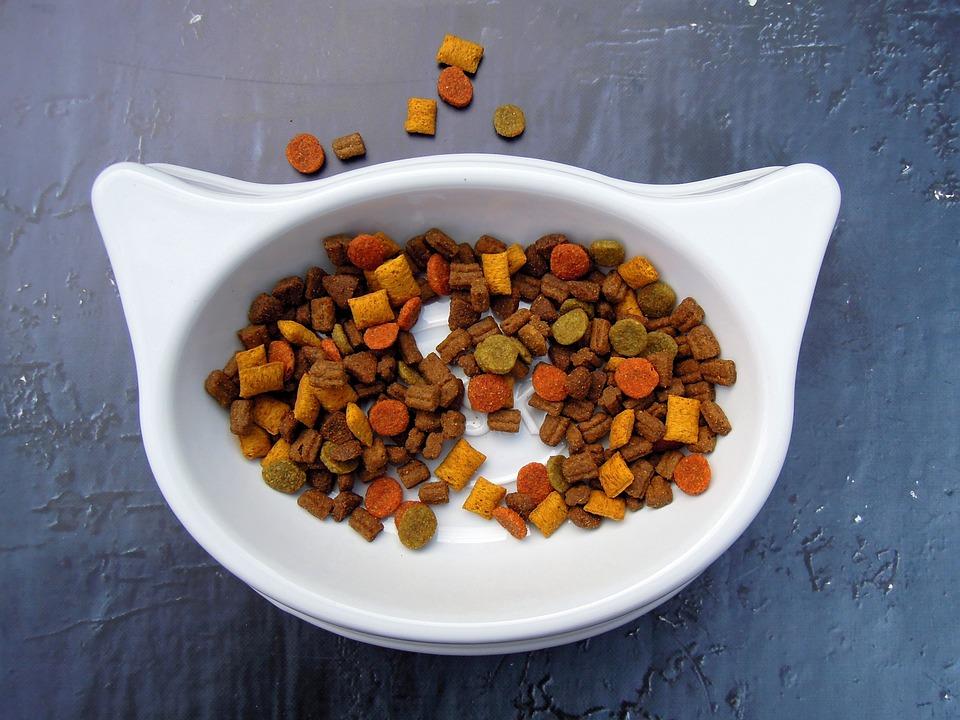 cat food pet food dry food bowl