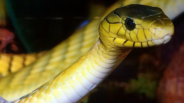 Snake, Green, Yellow, Animal, Nature