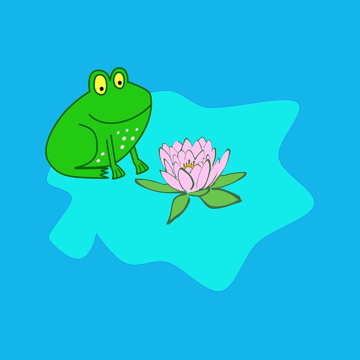 Katak Bunga Daun Teratai Lily Gambar Gratis Di Pixabay