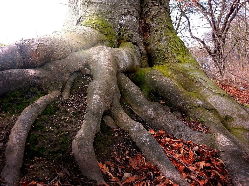 Root, Boom, De Natuur, Hout, Bos, Tree Root, Log