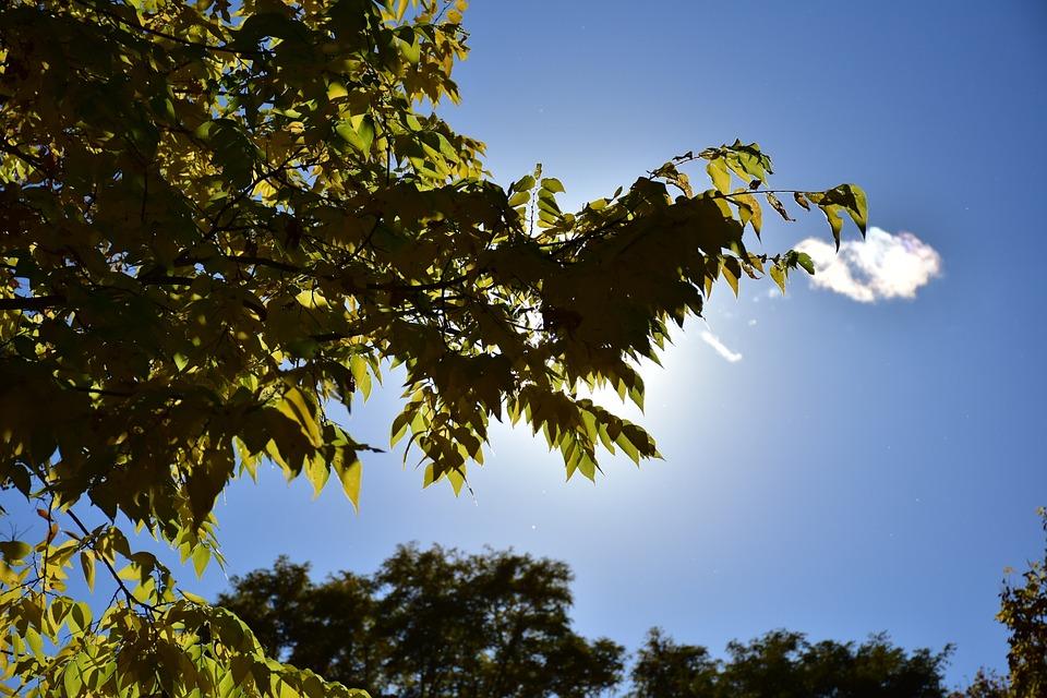feuilles arbre ciel soleil nuages ombre plantes - Arbre Ciel