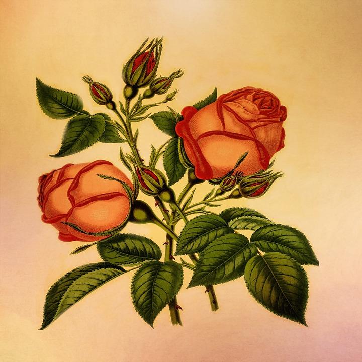 Vintage Flowers Part - 35: Vintage Flowers Floral Vintage Nature Grunge Rose