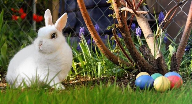 Easter, Hare, White, Easter Eggs, Egg