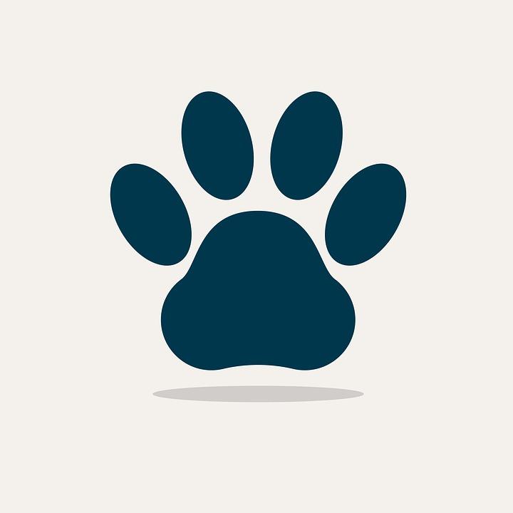 Pixabay - Image patte de chien gratuite ...