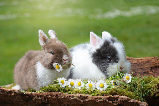 Rabbit, Easter, Hare, Mammal, Nature