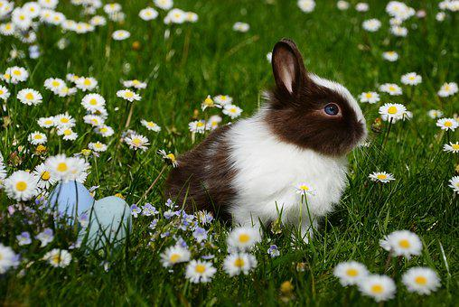 Easter, Rabbit, Mammal, Easter Bunny