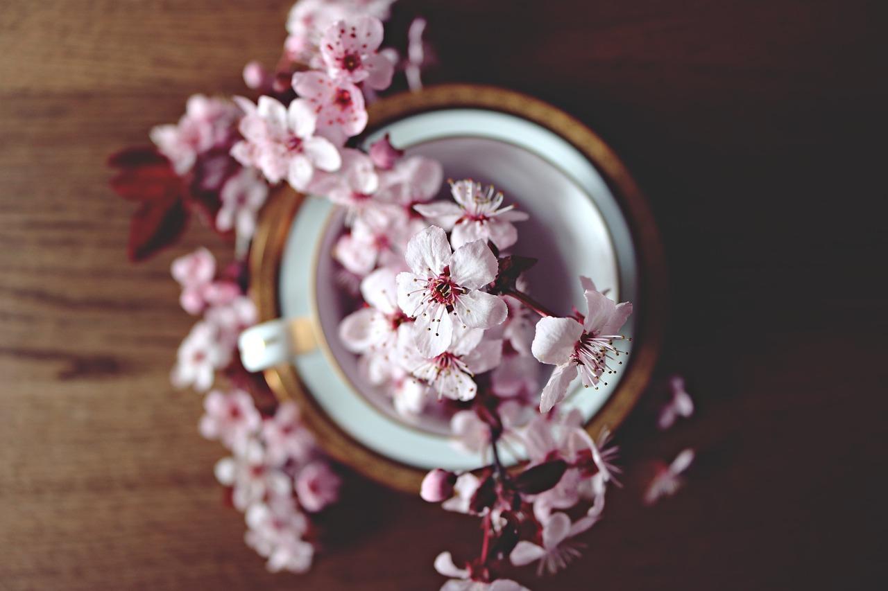 春, 桜, ブルーム, 花, 自然, ツリー, 支店, 開花, 花柄, ピンク, 庭, シーズン, 茶碗