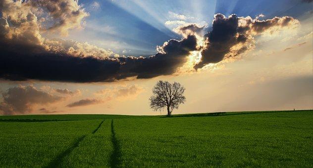 田舎, ツリー, 風景, 日光, 自然, 空