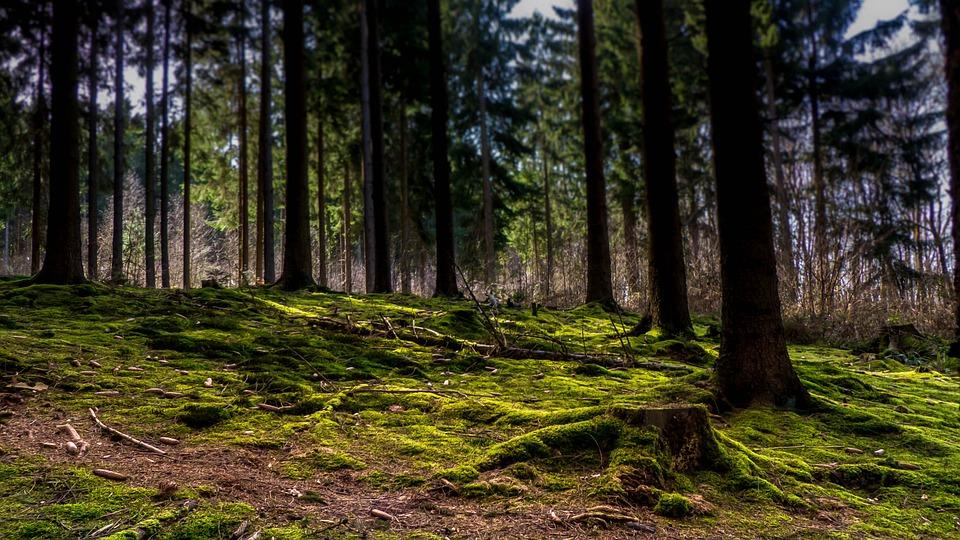 Леса, Мох, Мистический, Природы, Пень, Зеленый, Деревья