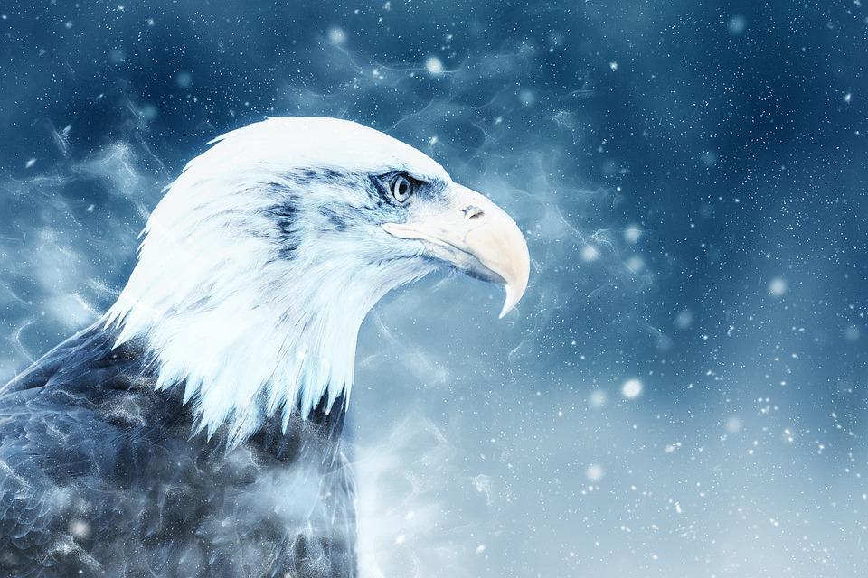 adler vogel schnee 183 kostenloses bild auf pixabay