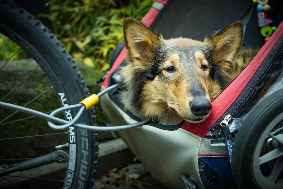 Alternatief Vervoer, Fiets Aanhanger, Hond, Huisdier