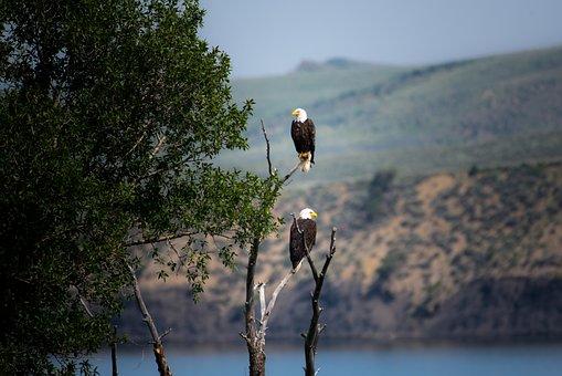 μεγάλο τεράστιο μαύρο πουλί φωτογραφίες