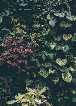 Botanical, Shrub, Bush, Ivy, Leaves