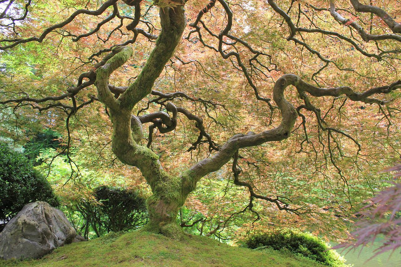 наши извилистое дерево фото болты замоноличиваются