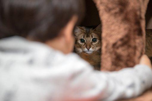 Animal, Baby, Bed, Cat, Curiosity, Cute
