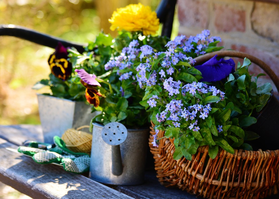 Blumen pflanzen  Kostenloses Foto: Garten, Blumen, Blumen Pflanzen - Kostenloses ...