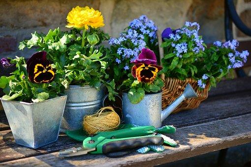 Jardin, Fleurs, Plante Fleurs, Jardinage