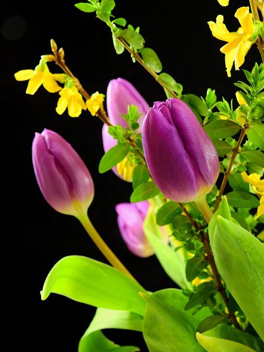 free photo tulips, flowers, blossom, bloom  free image on, Beautiful flower