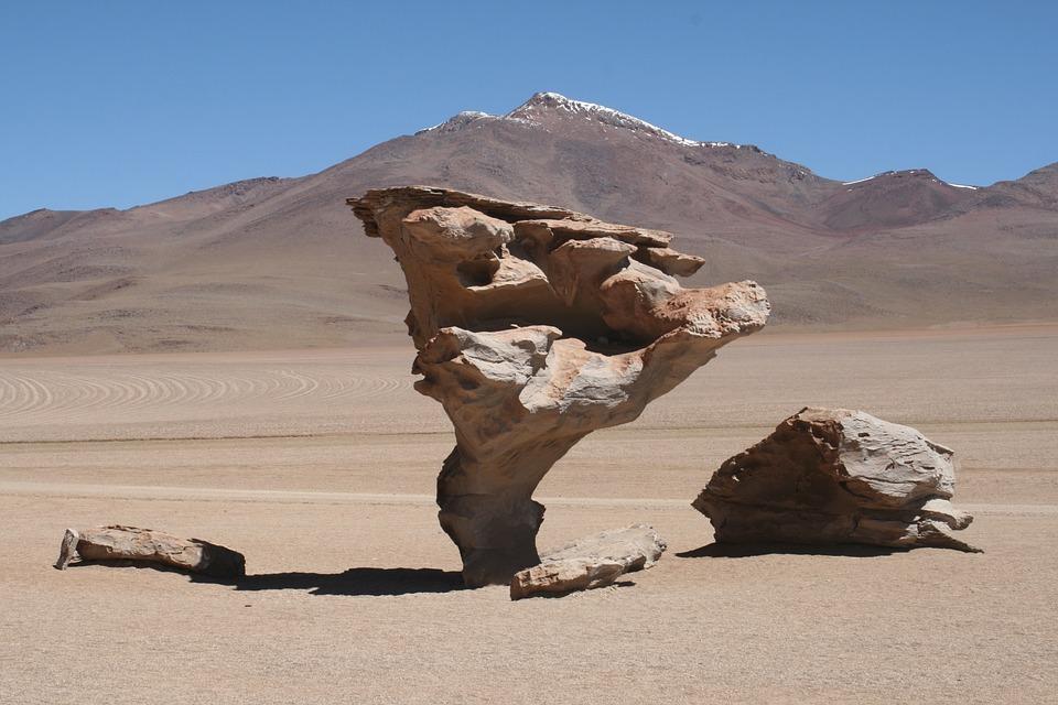 Desert, Life, Atacama, Chile