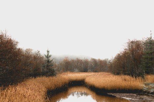 Bog, Forest, Ireland, Marsh, Reeds