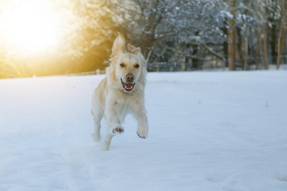 Dog race snow free photo on pixabay dog race snow happy play pets publicscrutiny Choice Image