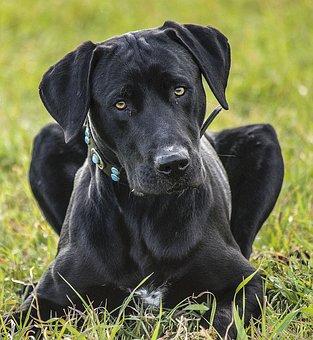 Cão, Animal De Estimação, Animais