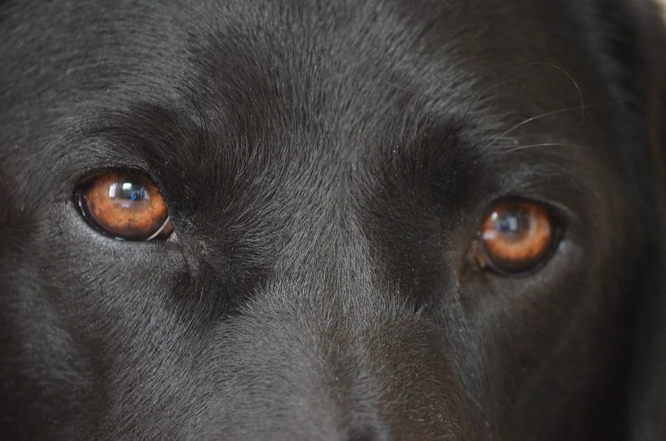 Dogs And Eye Problems